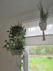 einrichtungsideen mit zimmerpflanzen