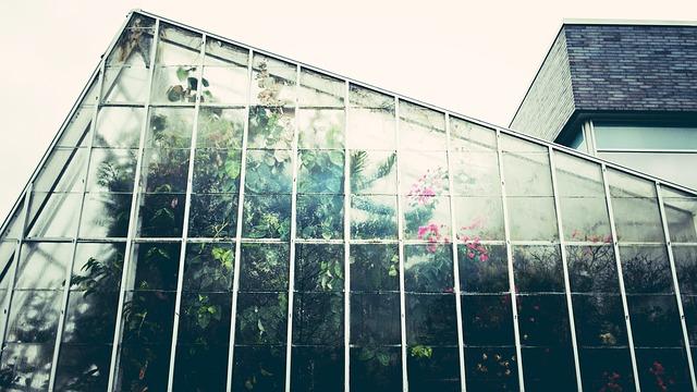 pflanzen in wohnung anbauen