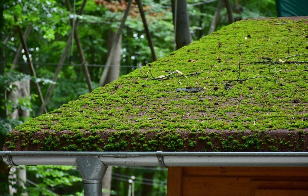 moos auf dach